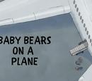 Baby Bears on a Plane