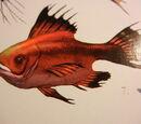 Bloodfish