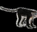 Tonkin Snub-Nosed Monkey (Bunteriro)