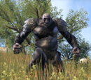 Oger (Online)