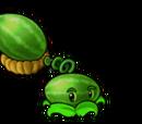 Cata-melon