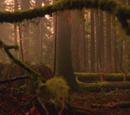Forêt de Storybrooke/Enfers