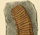 Zosterogrammidae