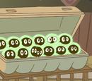 Renacuajos de Sapo Toro