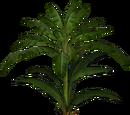 Banana Leaf Palm (Feral Designs)