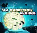 Sea Monkeying Around