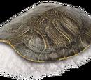 Salt Turtle
