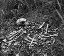Knochenwald: Durch Mark und Bein