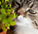 A Medicine Cat's Guide For Herbs