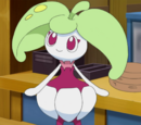 Mallow's Steenee (anime)