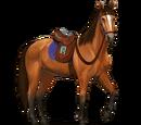 Horse Adventure