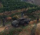 Water the Vineyard