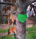 Peter Steele Tree.jpg