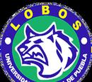 Lobos UAP