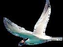 Roseate Tern.png