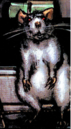 Buster (Rat) (Earth-616) from Black Panther Vol 3 1 001.png