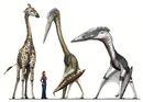 Pterosaur scale2.jpg