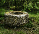 Old Forest/Abandoned Well