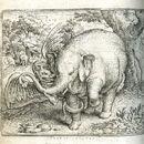 Plinius Elefant 3.jpg