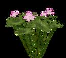 Indian Lotus (Aurora Designs)