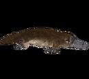 Platypus (Aurora Designs)