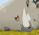 Пара — скворец и носорог