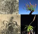 Plantarum escarum