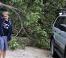 Psycho Tree Crushes Car