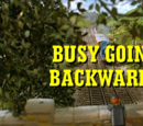 Busy Going Backwards/Gallery