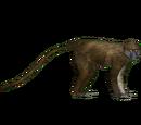 Allen's Swamp Monkey (DutchDesigns)