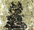 Мегаменопон