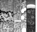Episode 349 (Manga)