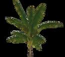 Palm (Zoker)