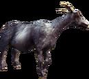 Goatborn
