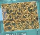 Pedanium