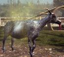 Repulsive Goat