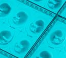 Человеческий эмбрион второго поколения