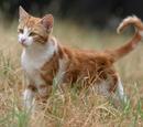 Katten uit het verre verleden