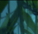 The Kelp Monster Mystery
