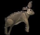 Туша кролика