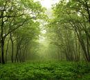 Spirit world(forest)