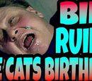 BILL RUINS THE CATS BIRTHDAY!!!