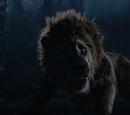 Lion Poltron