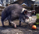 Psijik-Dominoschwein