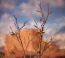 Деревник