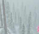 Isenskog
