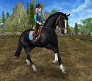 Koń hanowerski