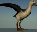 Bone Butte Bird