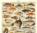 Actinopterygii (Taxonomy)