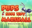 Pups Save Tiny Marshall